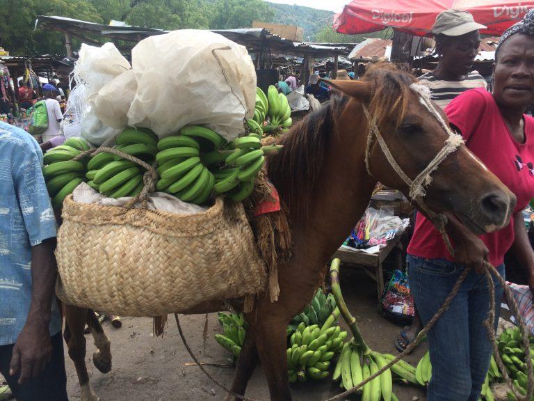 Market_donkey