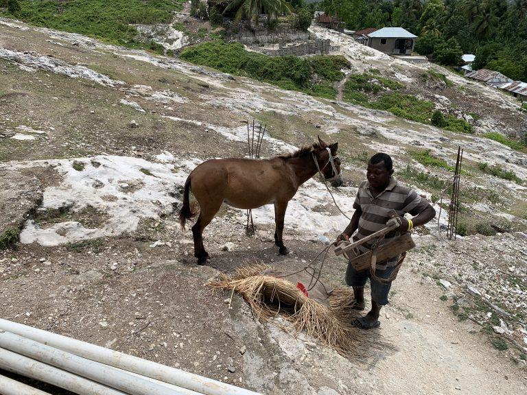 Mrs Renette's mule.